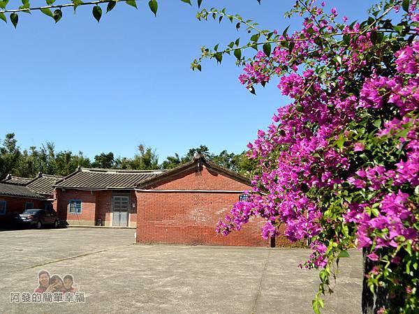 落羽松大道14-三合院門口前的紫色花叢