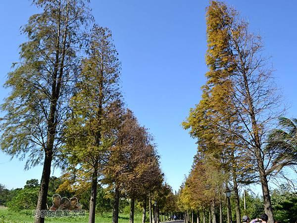 落羽松大道26-落羽松大道尾段-落羽松與藍天