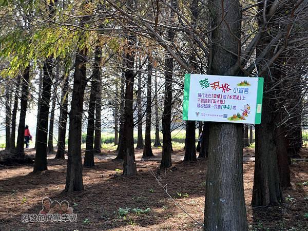 落羽松森林06-行走在田梗上