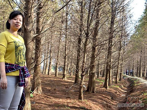 落羽松森林11-怎麼拍怎麼美喔