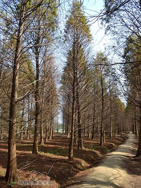 落羽松森林13-有如與世隔絕的秘境小徑