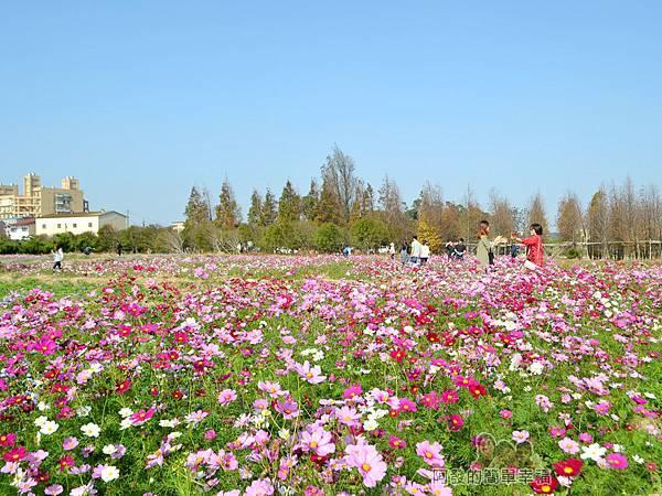 落羽松森林24-一旁萬紫千紅的花海