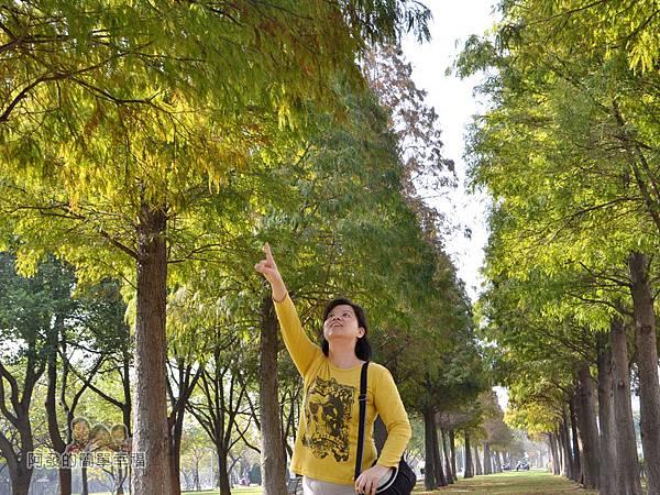 玉山公園03-有如落羽松林蔭步道