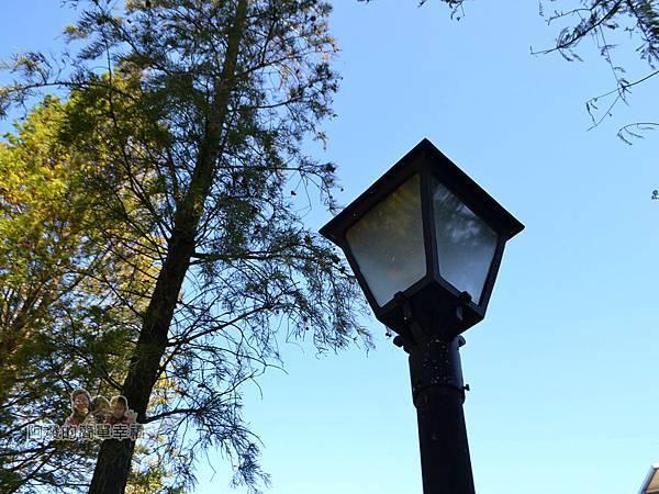 落羽松大道06-頗有質感的路燈
