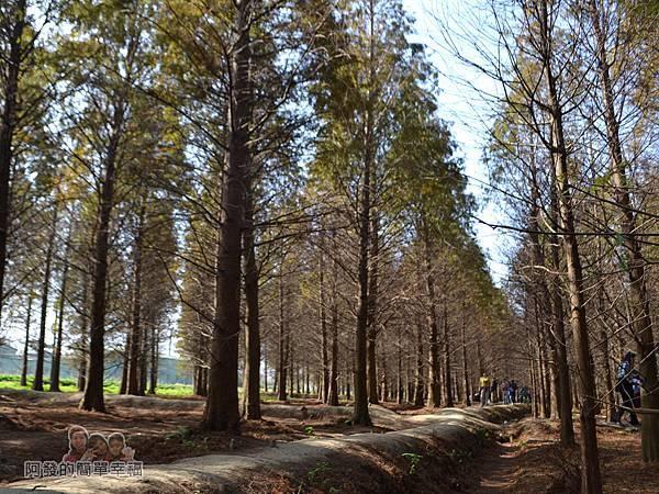 落羽松森林15-有如異國般的風情畫作