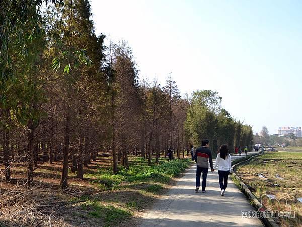 落羽松森林22-不少年輕情侶來此讓感情更加升溫