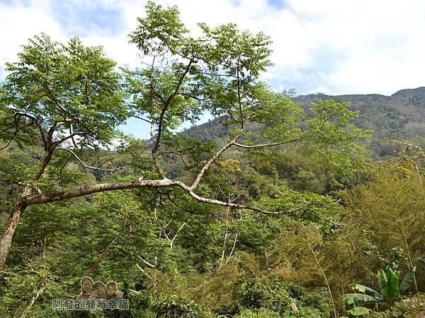 洗水坑李花祕境20-翠綠的山境