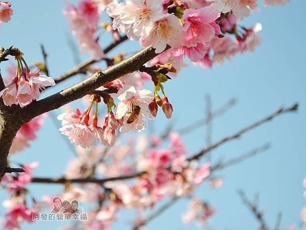 東湖樂活公園11-忙著採蜜的蜜蜂