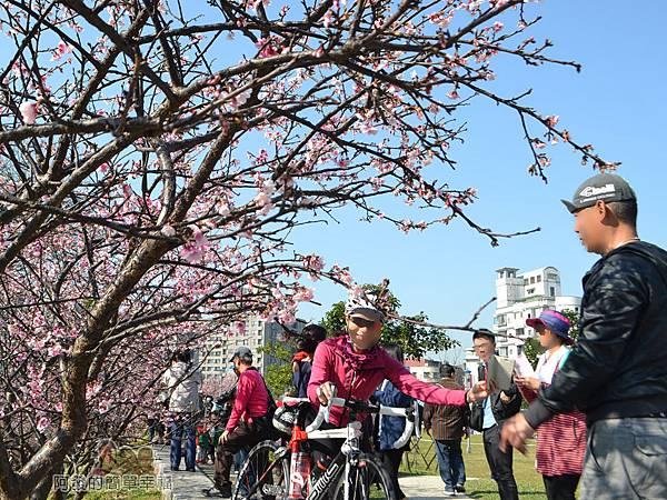 東湖樂活公園13-很有Fu的粉紅櫻花步道爭相留影