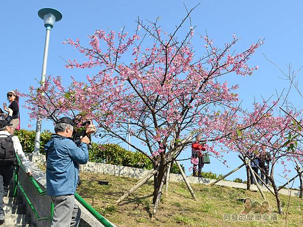 東湖樂活公園18-櫻花步道土坡的階梯II