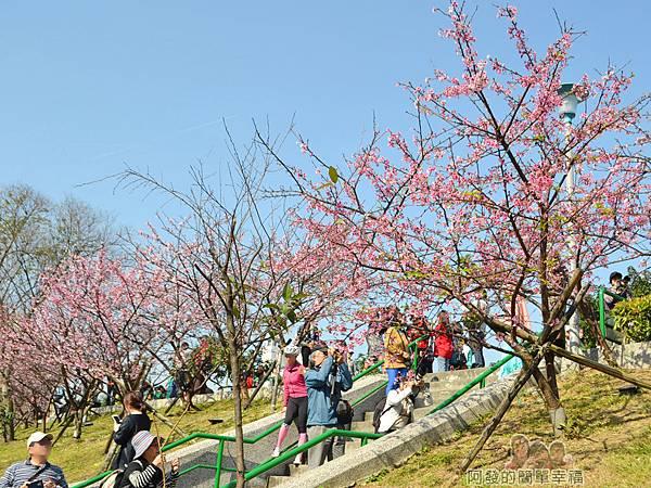 東湖樂活公園19-櫻花步道土坡的階梯III