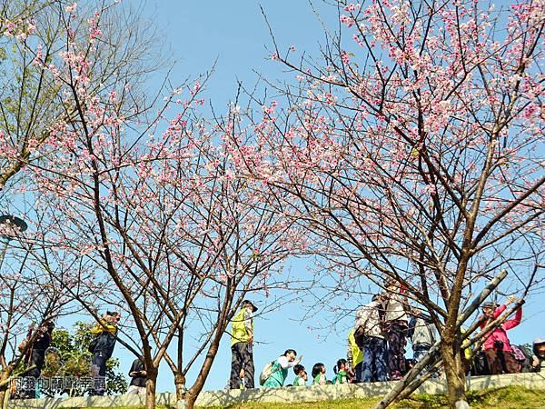 東湖樂活公園22-內溝溪畔步道朝上一景II