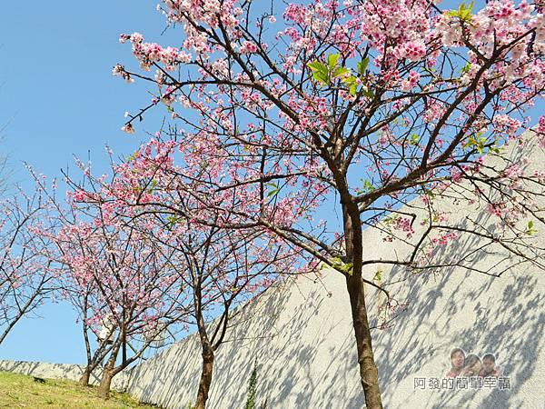 東湖樂活公園25-華城橋旁櫻景