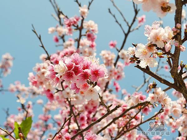 東湖樂活公園26-華城橋旁櫻景II