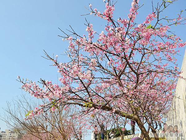 東湖樂活公園27-華城橋旁櫻景III