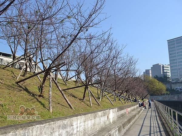 東湖樂活公園31-八重櫻步道