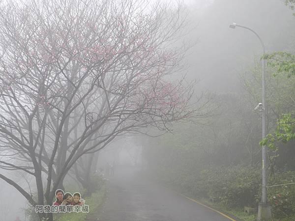 大尖山賞櫻02-雲霧瀰漫