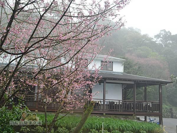 大尖山賞櫻12-珍饡玉膳餐廳與櫻花樹