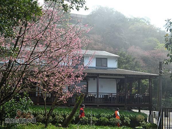 大尖山賞櫻23-珍饡玉膳餐廳周邊雲霧漸散