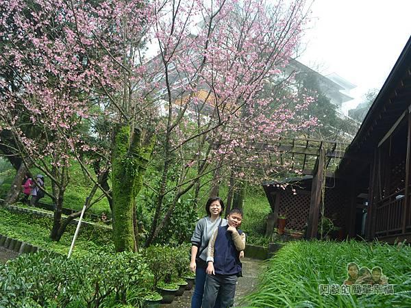 大尖山賞櫻26-餐廳旁櫻花樹下留影