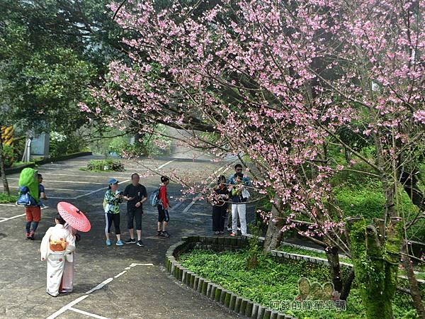 大尖山賞櫻33-櫻花樹下穿著和服的女模