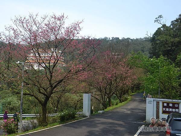 大尖山賞櫻40-勤進路上彌勒山天道清修院的入口