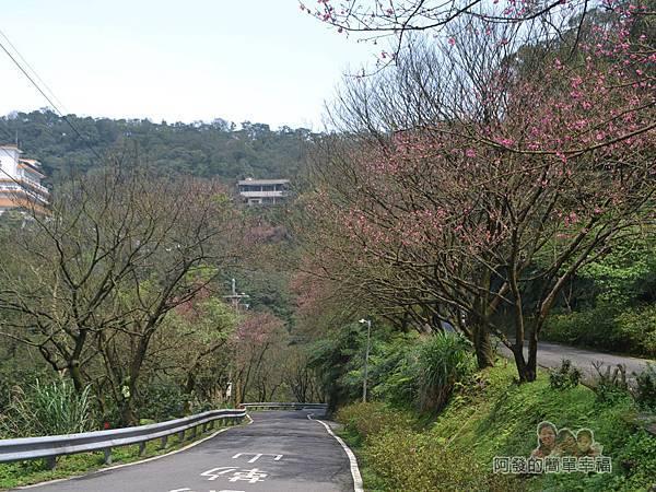大尖山賞櫻41-勤進路上的櫻景