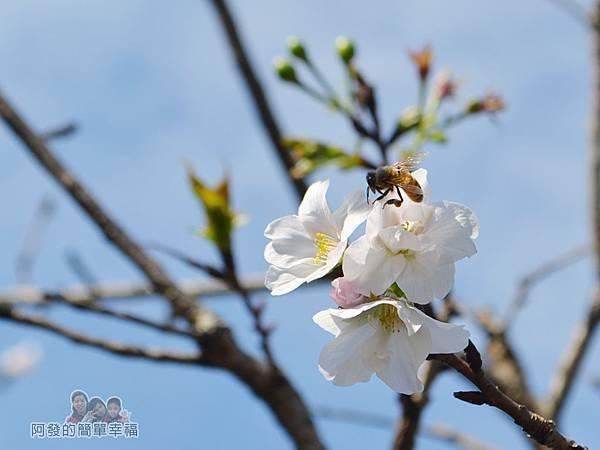 三生步道10-蜜蜂忙進忙出採蜜