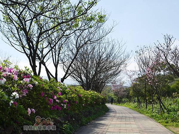 三生步道20-杜鵑花盛開