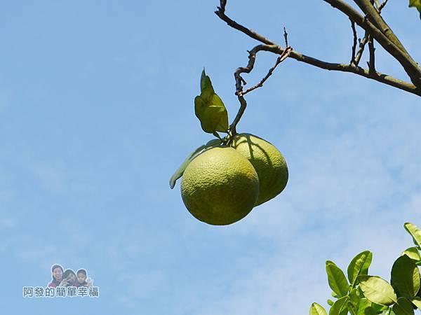 三生步道23-柚子樹