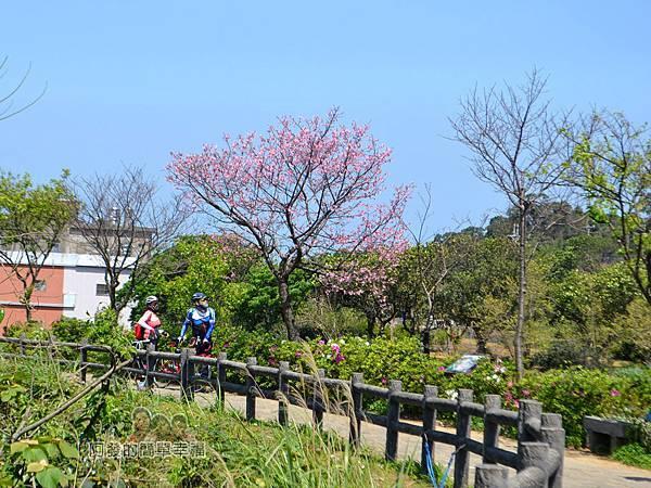 三生步道36-盛開的櫻花樹