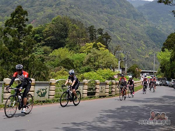 小溪頭柳杉林(黑森林)04-自行車隊