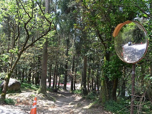 小溪頭柳杉林(黑森林)08-黑森林入口