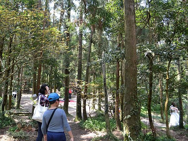 小溪頭柳杉林(黑森林)09-一進入就看到有婚攝