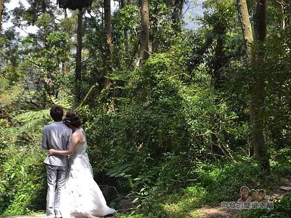 小溪頭柳杉林(黑森林)10-婚攝中的新人