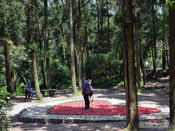 小溪頭柳杉林(黑森林)11-中央有座石堆愛心造景