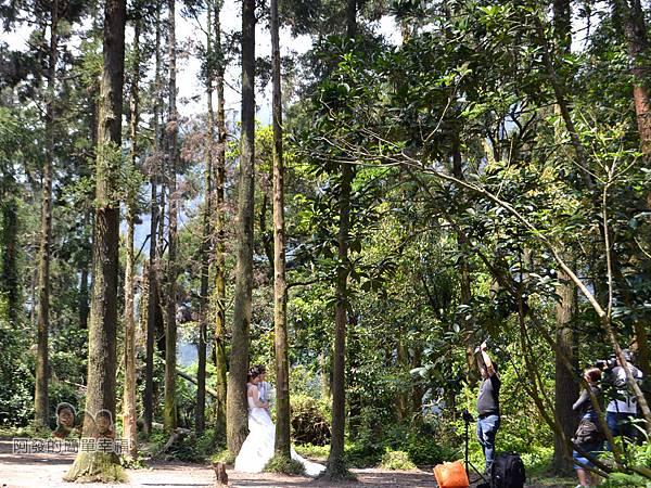 小溪頭柳杉林(黑森林)15-婚攝中的新人