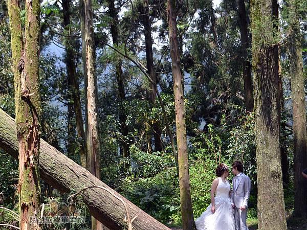 小溪頭柳杉林(黑森林)18-婚攝中甜蜜的新人