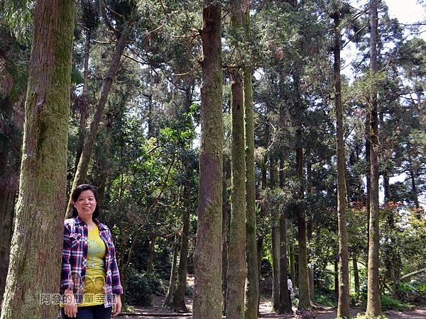 小溪頭柳杉林(黑森林)19-留影