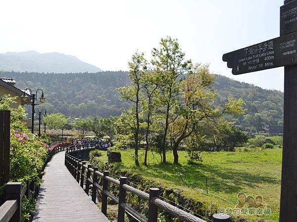 竹子湖海芋季04-竹子湖環狀步道之下湖海芋步道入口-苗榜花園餐廳旁