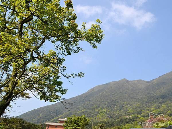 竹子湖海芋季05-藍天白雲青山綠樹