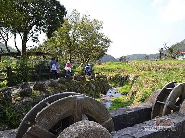 竹子湖海芋季06-很愜意的溪畔與田園風光