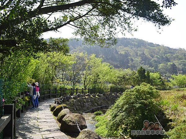 竹子湖海芋季07-下湖海芋步道溪畔風情