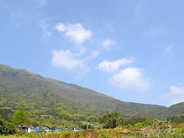 竹子湖海芋季09-讓人心曠神怡的景色