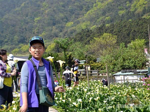 竹子湖海芋季20-開心自摘海芋的兒子