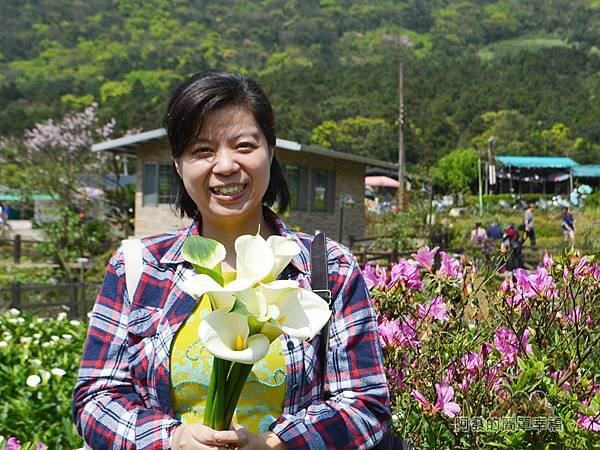 竹子湖海芋季25-摘完海芋的老婆