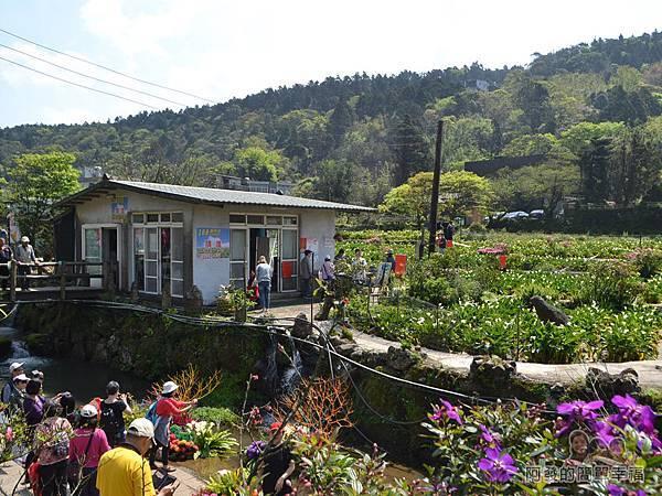 竹子湖海芋季29-溪畔造景拍照人潮