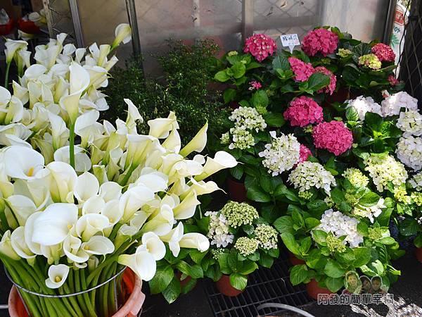 竹子湖海芋季38-路邊商家-欣欣花卉