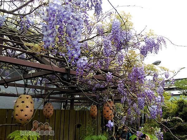 台北花卉村06-憨牛園-往年紫藤花盛綻時的景緻