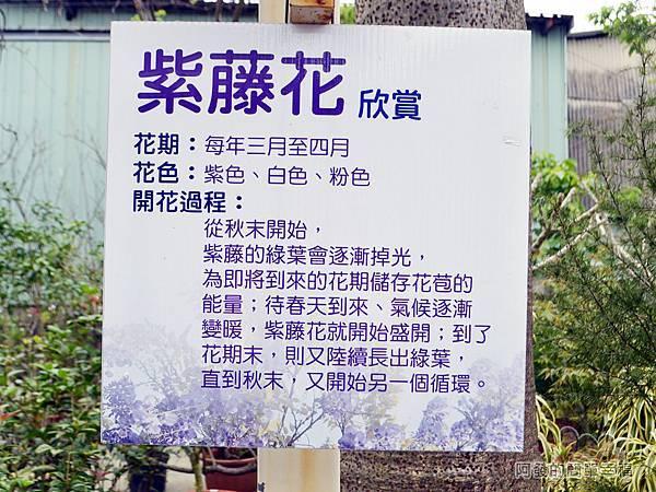台北花卉村07-憨牛園-紫藤花介紹
